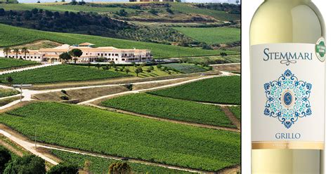 a sicilian experience wine travel food wtfa grape edventures books what is grillo wine sicily s white grape at stemmari