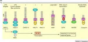 pattern recognition molecules definition pattern recognition molecules and innate immunity to