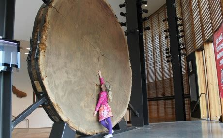 local paper highlights giant sequoia slab laboratory  tree ring research