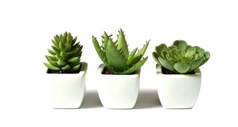 vasi per piante grasse vasi per piante grasse piante grasse vasi piante grasse