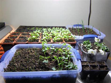 kitchen garden indoor top 5 herbs for your indoor kitchen garden environmental