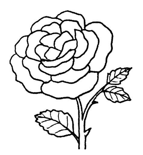 sketsa gambar bunga mawar harian nusantara
