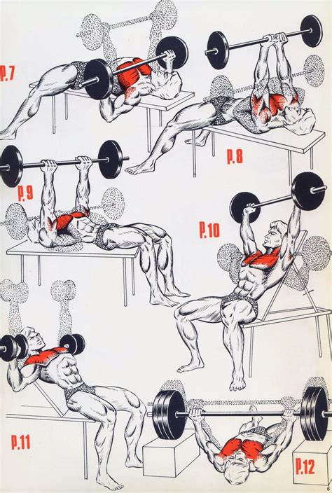 this a simple exercises for the begining s bodybuilding
