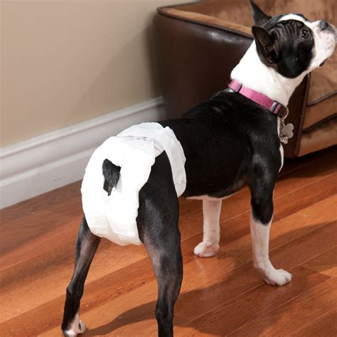 dogs in diapers most random thing you ve seen or done today in real page 19
