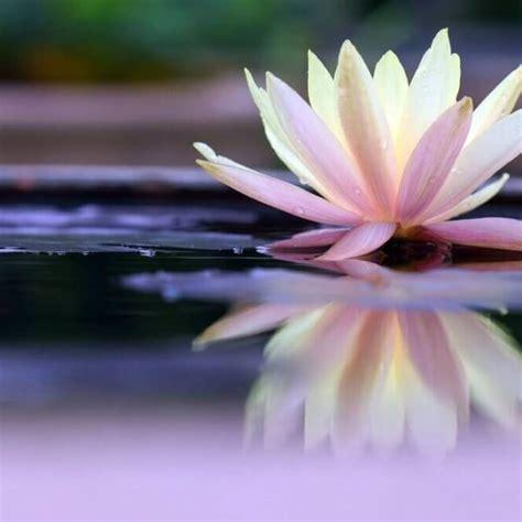 loto fiore rituale fiore di loto centro benessere ruffini torino