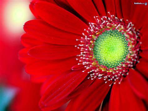 beautiful flowers image 花 赤色のおしゃれなipad2用壁紙 高画質 1024 215 768以上 naver まとめ