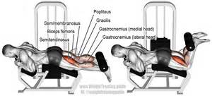 lying leg curl machine lying leg curl exercise and weight