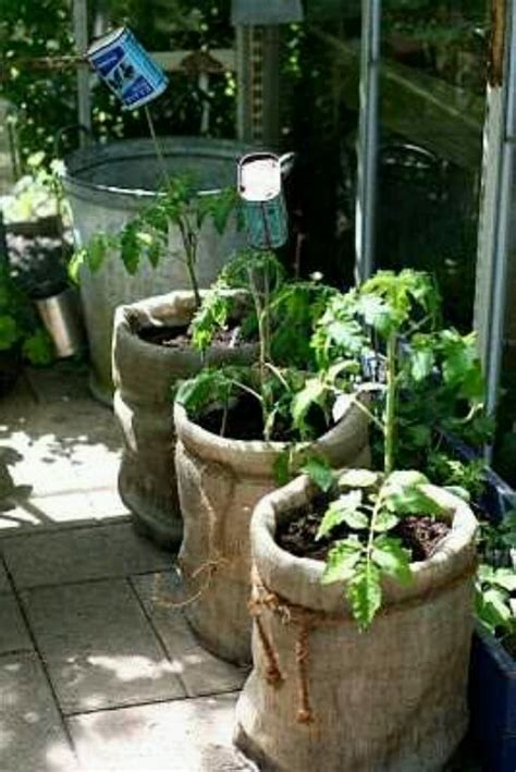 5 gallon burlap tomato plant gardens