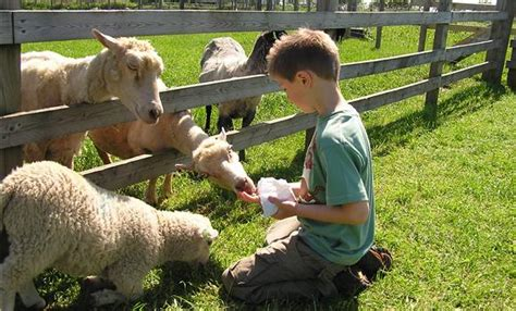 Feed the animals hall hill farm visit hall hill farm and meet the animals a great day out for