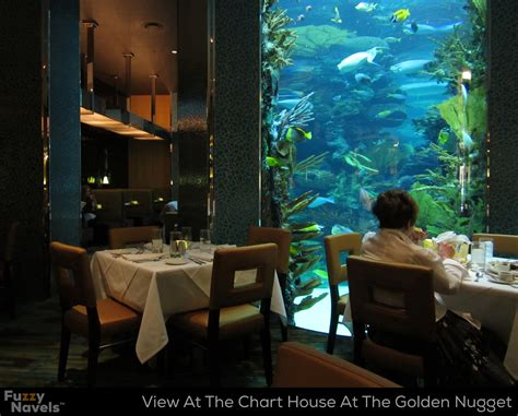 looking at aquarium from dining table at chart house in