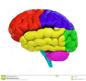 brain color colored brain stock image image 25118781