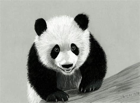 drawn panda pencil drawing pencil   color drawn