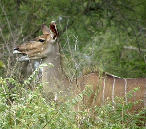 kruger national park south africa travel   galen  frysinger sheboygan wisconsin