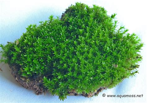 looking for new species of mosses