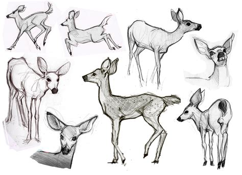 how to doodle animals alison s animal sketches