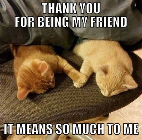 Friendship Meme - 17 best images about friendship memes on pinterest thank