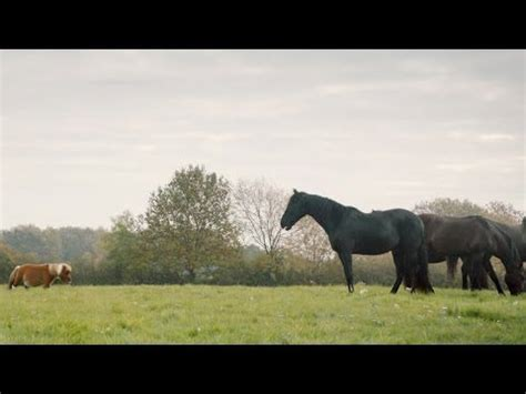 amazon commercial actress horse here s our brand spanking new amazon prime tv advert