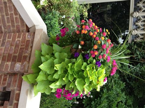 flowers for container gardening container gardens 8 fantastic ideas garden club