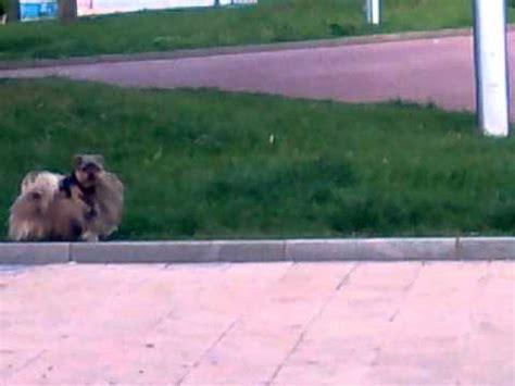 animales follando youtube perros follando en el felix xd youtube
