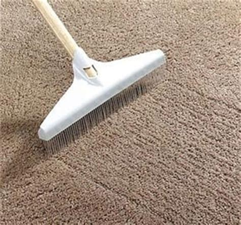 best vacuum for pet hair on carpet and hardwood floors best carpet rakes for removing pet hair from carpets and