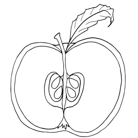 apple half coloring page parts of an apple coloring pages nomenclature cards