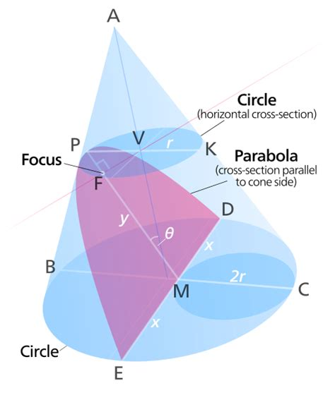 conical sections file parabolic conic section svg wikimedia commons