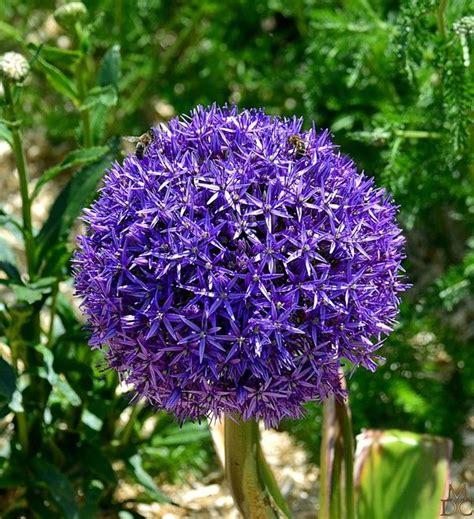 Fleurs Bleues Vivaces by Fleurs Bleues Vivaces