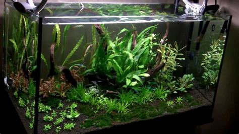 Aquarium 80 Cm By Arlicho 80cm nature aquarium