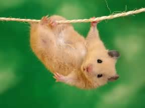 Download Love Is Blind Eve Hamster Manzara Resimleri