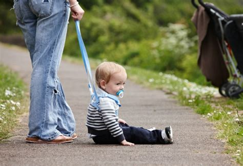 out on a leash how terryã s gave me new books pet pictures