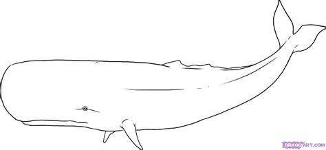 how to draw a sperm whale step by step sea animals