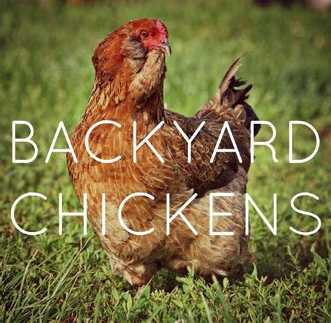 Benefits Of Backyard Chickens 17 Best Images About Makes Me Think About My Peeps On