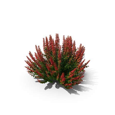 barberry bush png images psds   pixelsquid