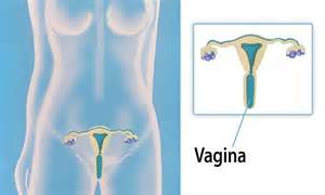 how wide is vagaina vagaina on on vaginal discharge causes symptoms