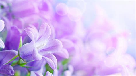 Gamis Purple Flower 1 柔美高清的花儿图片壁纸 桌面背景图片 高清桌面壁纸下载