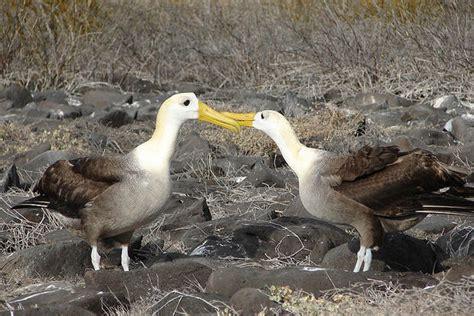 9 bizarre bird mating rituals mental floss