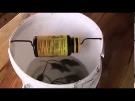 membuat jebakan tikus got membuat perangkap tikus sederhana untuk sawah youtube