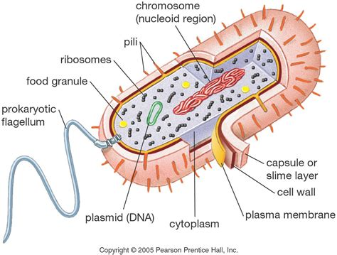 mikes  biology mob university bio  cell