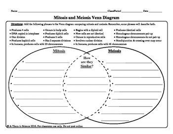 mitosis and meiosis venn diagram answers mitosis and meiosis venn diagram by a thom ic science tpt