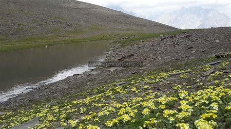 Tirich Mir Base Camp Trek   16 Days   Apricot Tours