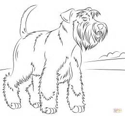 miniature schnauzer coloring page super coloring dog