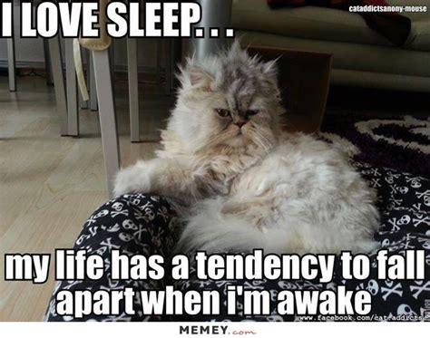 Lazy Cat Meme - funny lazy cat memes