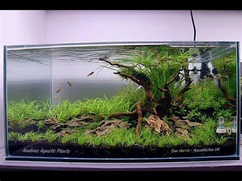 video aquascape aquascape quot new beginnings quot step by step aquascaped by dan harris