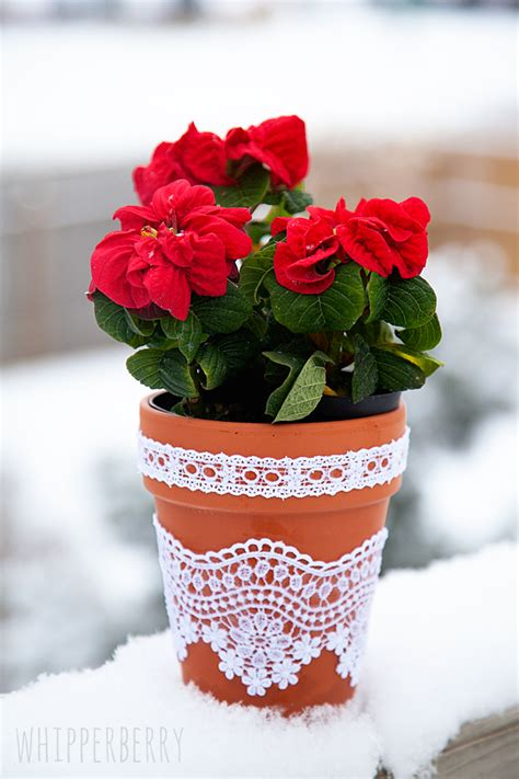 images of 6 flowers in pots diy lace flower pots whipperberry