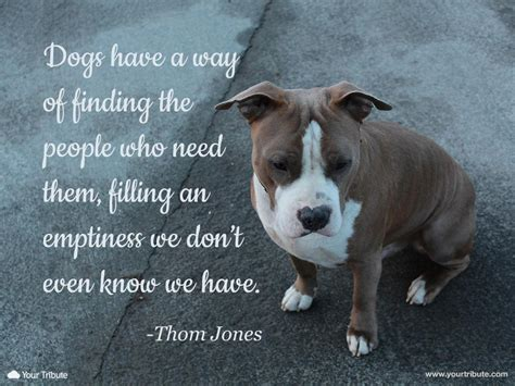 loss of a quotes pet loss quotes on pet sympathy quotes loss quotes quotes