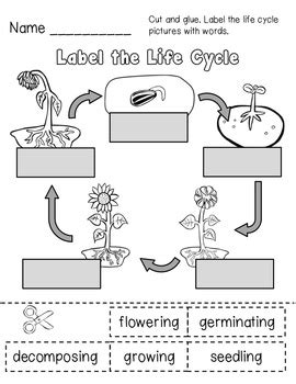 be a bean lessons for anyone and everyone who wants to lead a be a better leader and change the world books flower cycle worksheet calleveryonedaveday