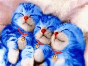Sho Kucing Anggora hellven doraemon