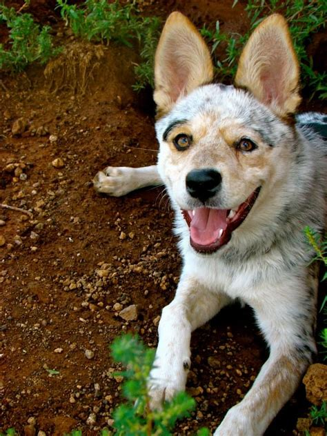 adoption az pin by petfinder foundation on pinning for pets