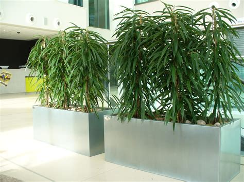 office plants live indoor and interior office planting schemes rental