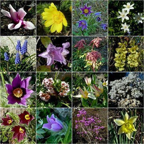 wilde bloemen in duitsland 349 beste afbeeldingen van alpenbloemen en planten